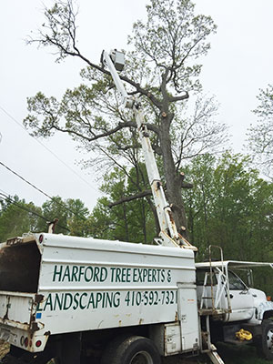 Harford Ttree Expert Removing Tree from Commercial Property